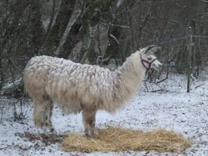 snowywindy