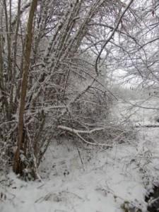 January weather