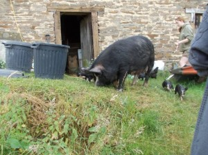 piglets outside stage6
