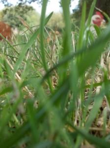 mud bath chickens grass