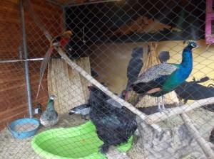 bordo novdec birds