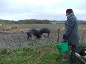 chris pigs