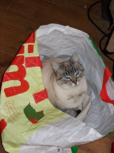 Gigi decided to sit in one of the shopping bags as we were getting ready to go!