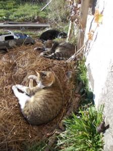 dec cats sunning