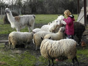 Here I am feeding some of our better behaved animals this morning