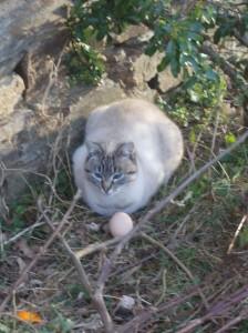 cat laid egg