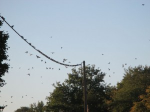swallow central2