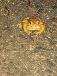 toad front
