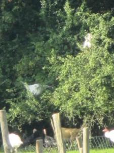 turkeytree2