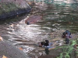 canada biodome beaver2