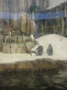 canada biodome penguins snow