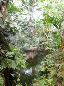 canada biodome rainforest