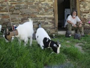 chris goats sitting