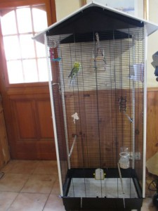 bday budgies cage